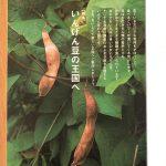 GREEN 豆特集「いんげん豆の王国へ」